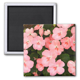 Delicate pink spring flowers fridge magnet
