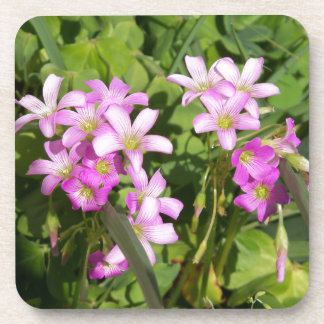 Delicate pink Spring wildflowers Coaster