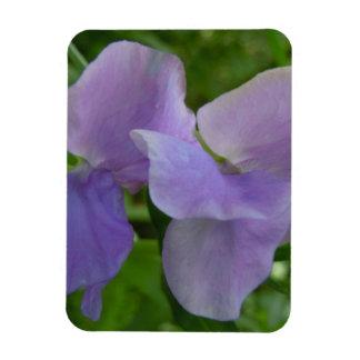 delicate purple sweet pea flexible magnet