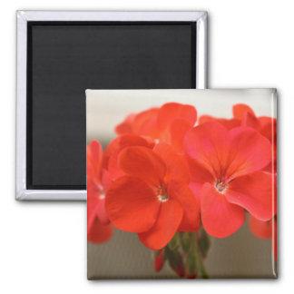 Delicate Red Geranium Floral Magnet