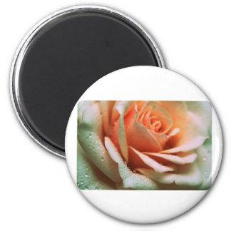 Delicate Rose 6 Cm Round Magnet