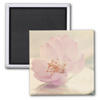 Delicate Soft Pink Cherry Blossom Flower Square Magnet