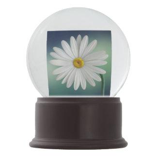 Delicate White Daisy Snow Globe