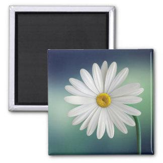 Delicate White Daisy Square Magnet