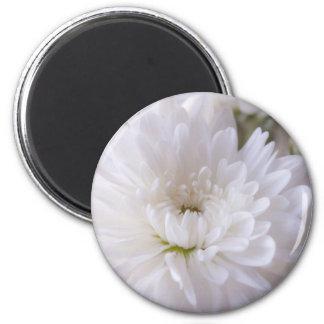 Delicate White Mum Magnet