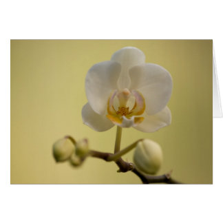 Delicate White Orchid Card