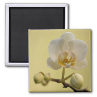 Delicate White Orchid Refrigerator Magnets