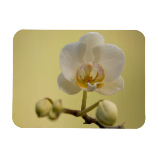 Delicate White Orchid Flexible Magnets