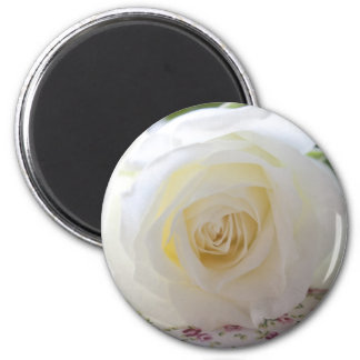 Delicate White Rose Photograph Refrigerator Magnet