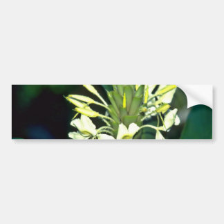 Delicate White Tropical Flowers flowers Bumper Sticker