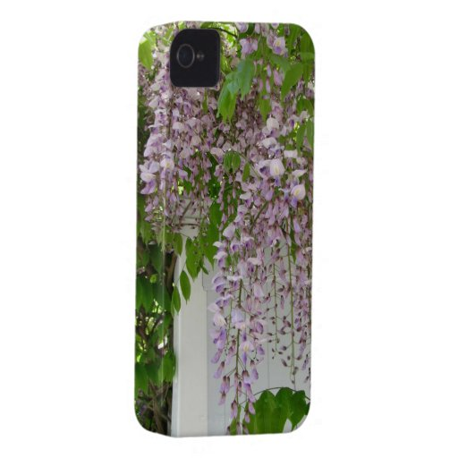 Delicate Wisteria ~ iPhone 4 CaseMate Barely There iPhone 4 Case-Mate Cases