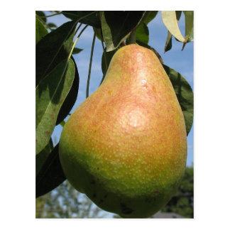 Delicious Pear Postcard