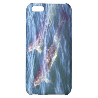 Delphinus delphis iPhone 5C cases