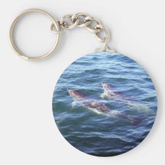 Delphinus delphis key chain