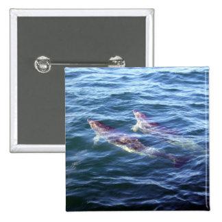 Delphinus delphis pinback buttons