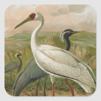 Demoiselle and Siberian Cranes Vintage Bird Square Sticker