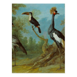 Demoiselle Crane, Toucan, and Tufted Crane Postcard