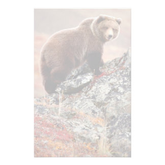 Denali Brown Bear Customized Stationery