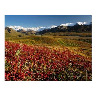 Denali National Park Postcard