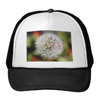Dendelion Mesh Hat