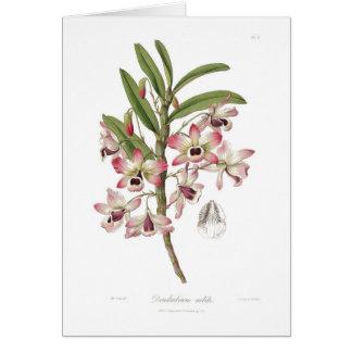 Dendrobium nobile card