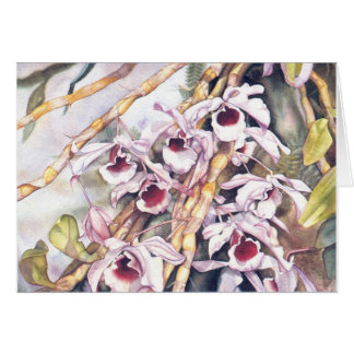 Dendrobiums Note card 2.95