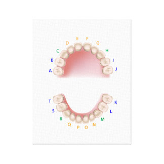 Dental notation milk teeth, canvas print