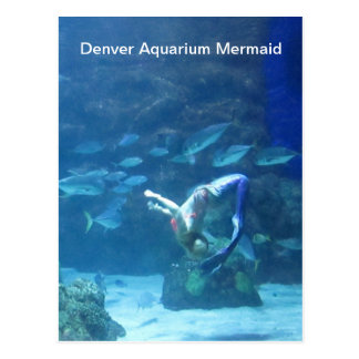 Denver Aquarium Mermaid Postcard