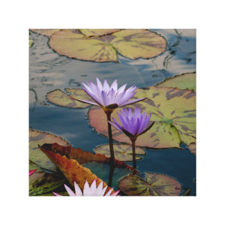 Denver CO Botanical Garden Lily Pad Wrapped Canvas Gallery Wrap Canvas