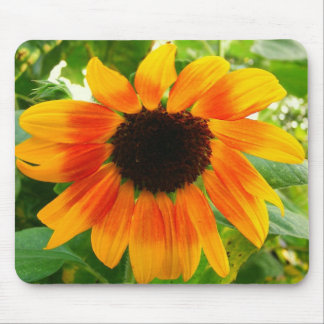 Depressed Sunflower Mouse Pads