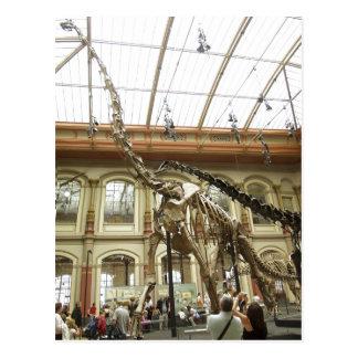 Description Museum f?r Naturkunde, Berlin: Skelett Postcard