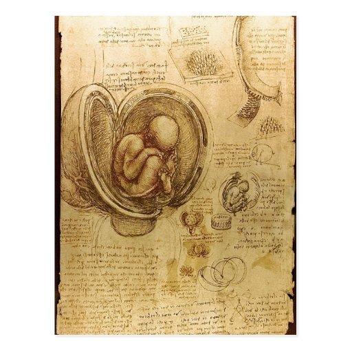 Description Studies of Embryos Leonardo da Vinci ( Post Card