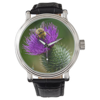 Desert Bee Pollinating Wildflowers in New Mexico Watch