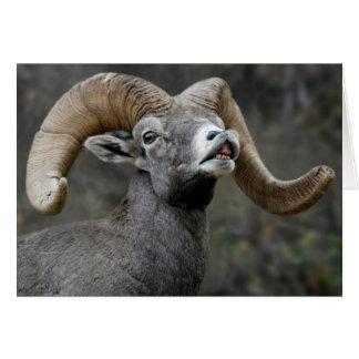 Desert Bighorn Ram Card