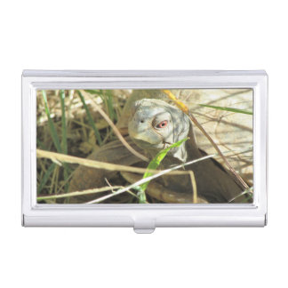 Desert Box Turtle Close-up Case For Business Cards