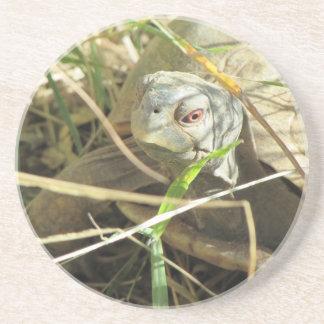 Desert Box Turtle Close-up Coaster