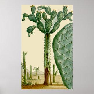 Desert Cacti Scene Poster