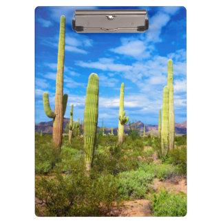 Desert cactus landscape, Arizona Clipboard