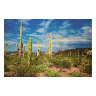 Desert cactus landscape, Arizona Wood Canvases