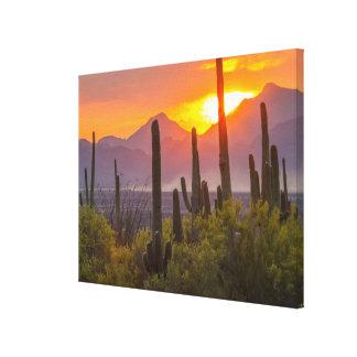 Desert cactus sunset, Arizona Canvas Print