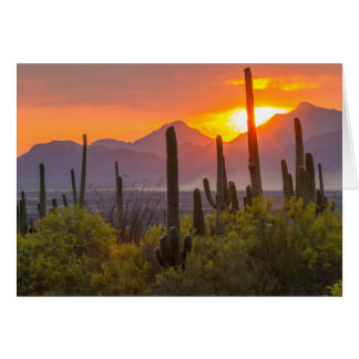 Desert cactus sunset, Arizona Card