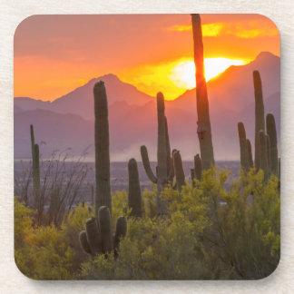 Desert cactus sunset, Arizona Coaster