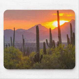 Desert cactus sunset, Arizona Mouse Pad