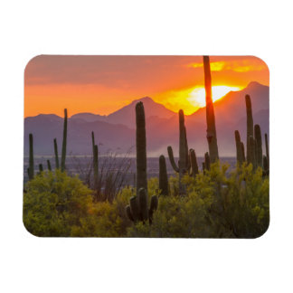 Desert cactus sunset, Arizona Rectangular Photo Magnet