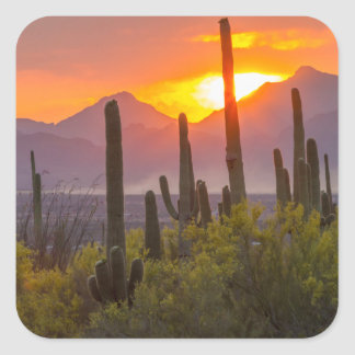 Desert cactus sunset, Arizona Square Sticker