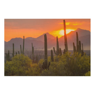 Desert cactus sunset, Arizona Wood Wall Art