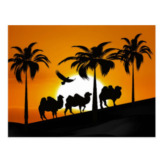 Desert Camels at sunset Postcard