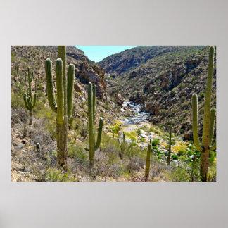 Desert Canyon Poster