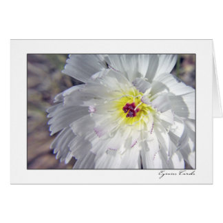 Desert Chicory Card