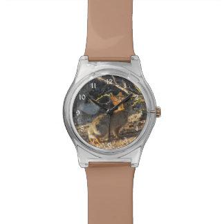 Desert Cottontail Rabbit Watch
